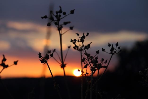 More beautiful sunsets